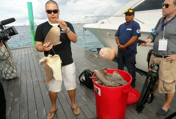 Pew Charitable Trusts shark expert Angelo Villagomez (L) explains about the types of shark fins that were confiscated by Marshall Islands fisheries enforcement officials. September 2013