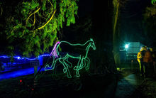 A neon light horse at Light Nelson event.