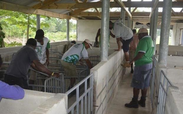 Livestock officers preparing pig breeding center in Vanuatu