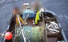 Hours of footage were recorded as part of Operation Achilles, which found discarding of blue moki and elephant fish.