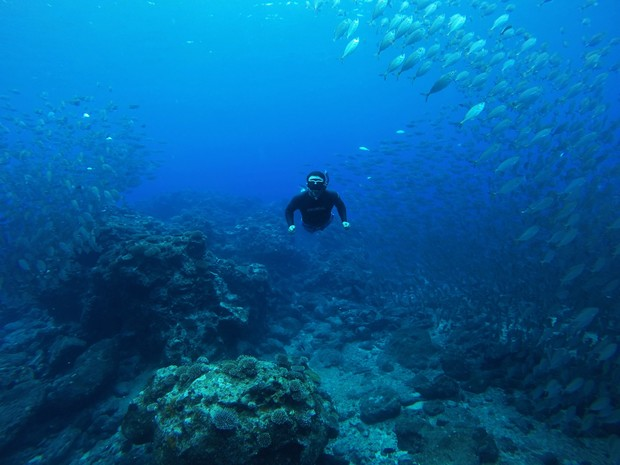 A snorkeler diving through a large school of fish at a coral reef