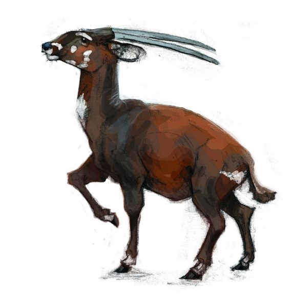 The Saola illustration