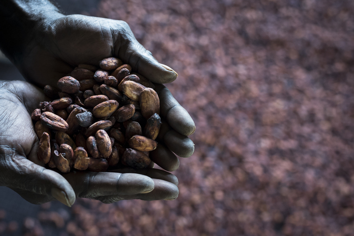 A revival of the cocoa industry has played a key role in helping to cement peace in the community of Konnou, in southern Bougainville.