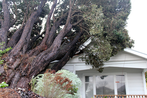 A fallen tree damaged the roof of a Lower Hutt house.