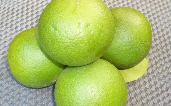 Tongan oranges