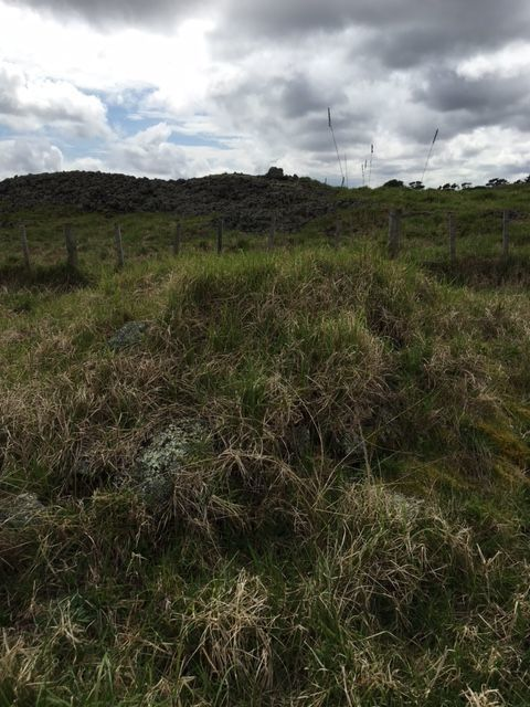 Raised nursery mound, hidden under kikuyu grass.