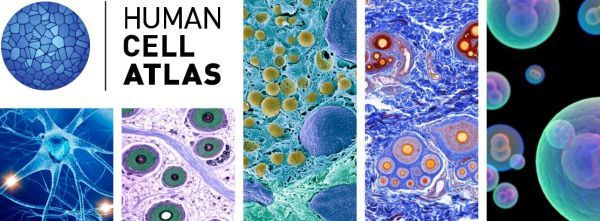 Human Cell Atlas banner