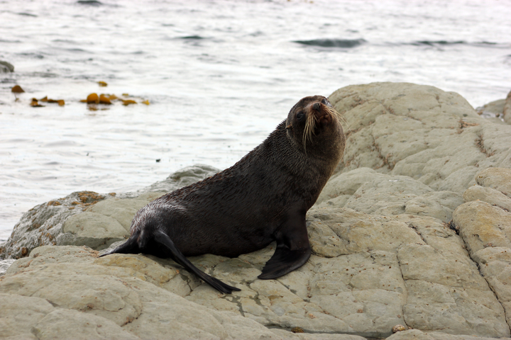 It's likely that some seals would not have been affected by the slip because it's likely they would have been out at sea foraging, said Mr Angus.