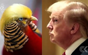 Trump look a like pheasant in China goes viral