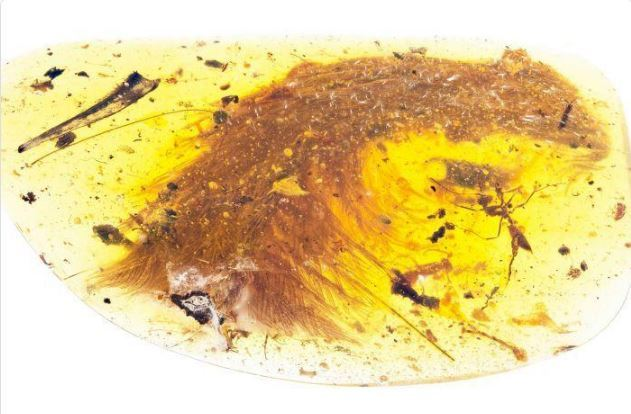 The tail of a feathered dinosaur has been found perfectly preserved in amber from Myanmar.