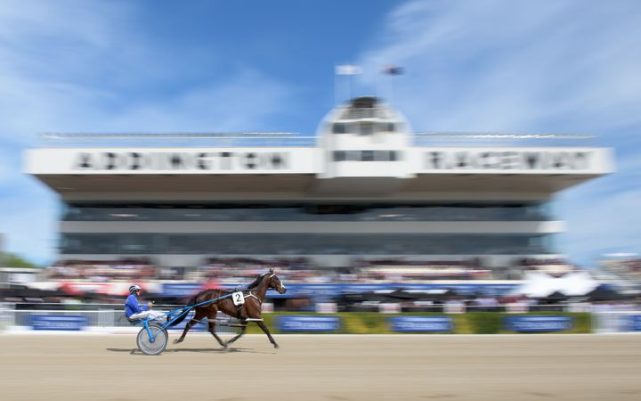A jockey drives his horse during the New Zealand Trotting Cup Day in front of the Metropolitan Stand at Addington Raceway on November 10, 2015 in Christchurch.