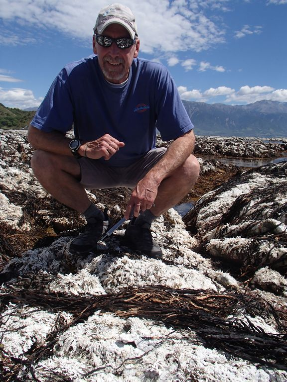 David Schiel surveys dead seaweeds and coralline turf.