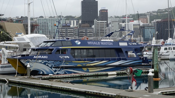 Whale Watch boat in Wellington harbour