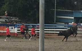Rodeo at Warkworth