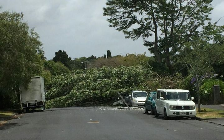 A tree that was brought down on a suburban street in Mt Eden in Auckland.