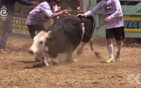Rodeo footage shows animals restrained, in distress
