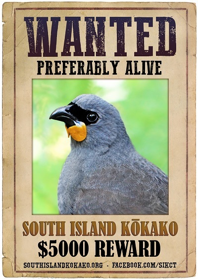 South Island Kokako Charitable Trust's poster is based on a 'tweaked' image of the North Island kokako.