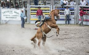 Cowboy lies down the back of a bucking horse