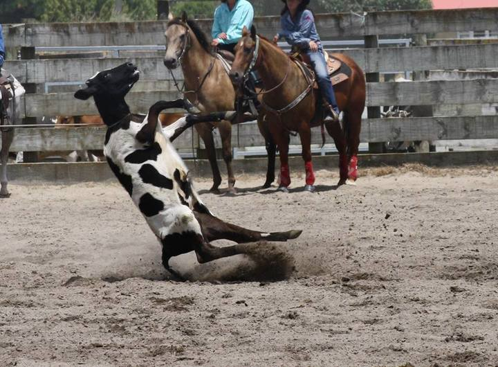 Calf-roping at the Huntly Rodeo 2013