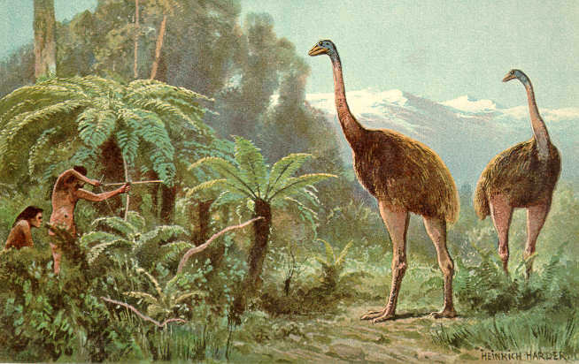 Moa illustration by Heinrich Harder