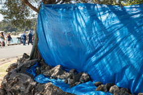 A tarpaulin erected to prevent media from filming proceedings on Te Tii Marae.
