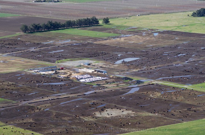 A feedlot in Waipawa.