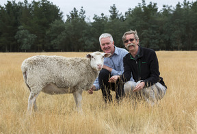 Sharon the sheep with scientists.