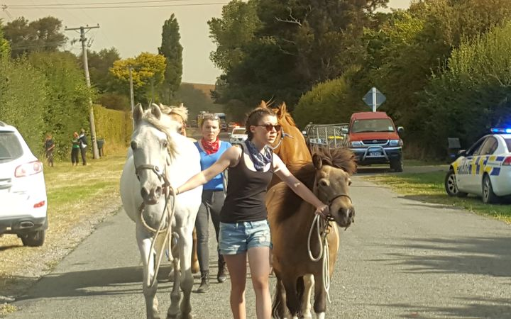 People leading horses out past cordon near Early Valley Road