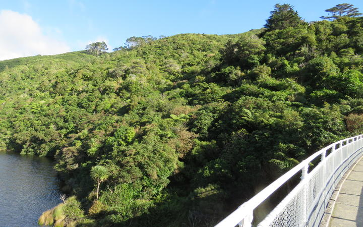 View from the top dam at Zealandia