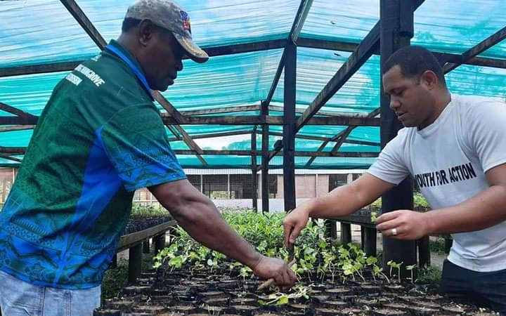Fijians have the opportunity to establish their own nurseries and raise fruit trees.