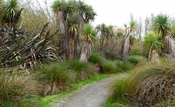 On a walk part way around the Travis Wetland Nature Heritage Park, Christchurch New Zealand.
