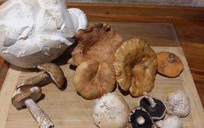 Neudorf mushrooms