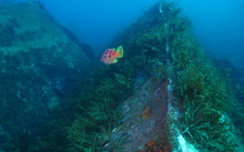 The Rena Wreck by Dr Phil Ross