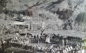 A Wilencote Polled Herefords bull sale in the early days