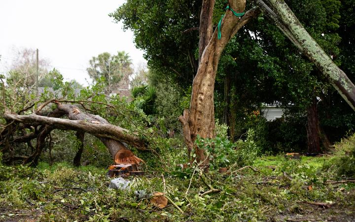 Thirty native trees at a Canal Road property in Avondale are facing the chop.