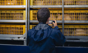 An Auckland Save Movement animal rights activist photographs a chicken transporter at Tegel, Henderson