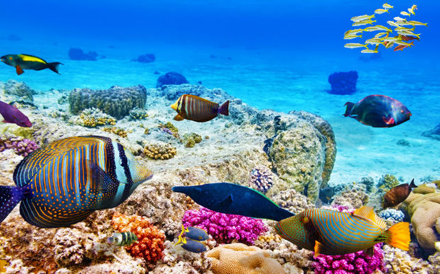 39 Now Or Never 39 To Save Great Barrier Reef Radio New