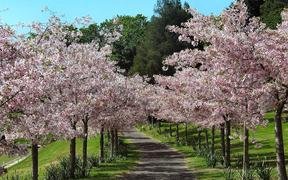 Auckland Domain in Spring