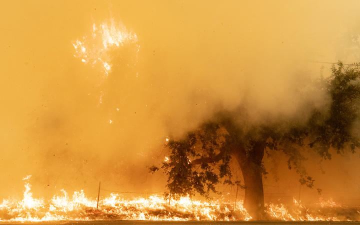 Flames and smoke overtake a tree as the LNU Lightning Complex fire continues to spread in Fairfield, California on 19 August, 2020.