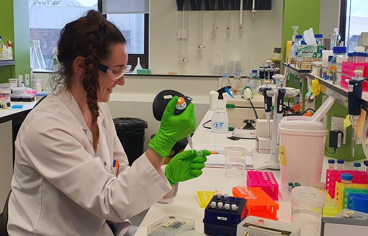 Phd student Rose McLellan at work in the Synthetic and Chemical Biology Laboratory, Victoria University of Wellington.