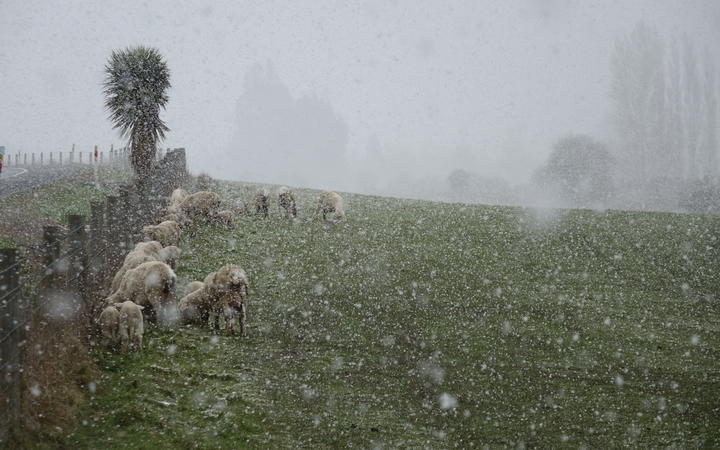 Livestock holding out on a farm near Waihola, Otago as the frost kicks in during a wintry blast on 29 September, 2020.