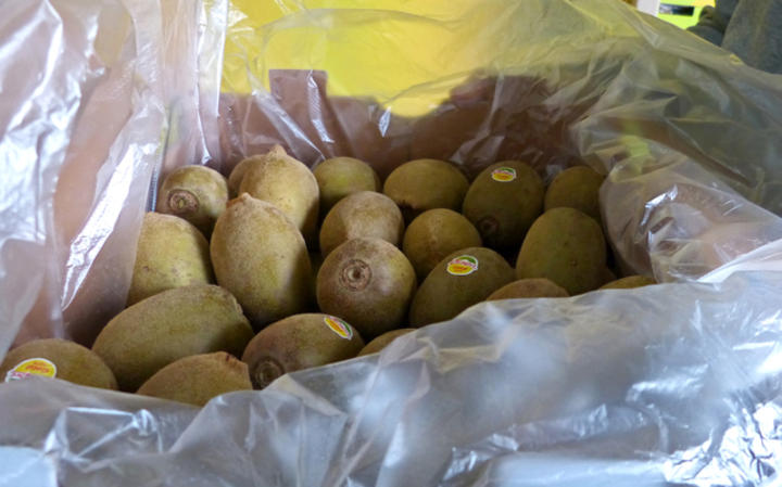 Zespri gold kiwifruit grown on Jeju Island.