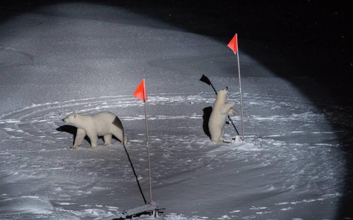 Polar bear mom and cub visit the ice floe.