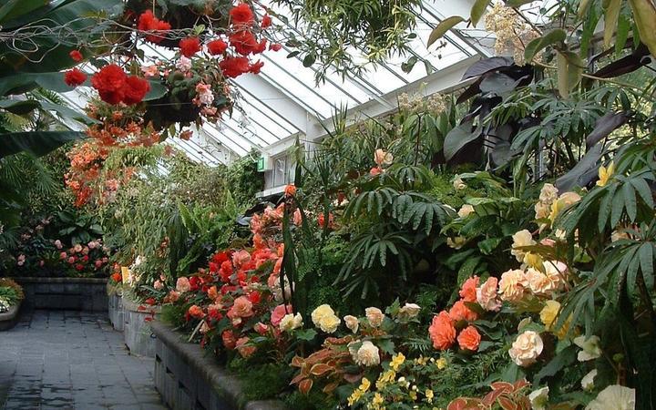 The Begonia House at Wellington Botanic Garden.