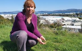 GNS Science radiocarbon scientist Jocelyn Turnbull is using grass to measure how much carbon dioxide is being emitted in New Zealand urban areas, such as Hutt City.