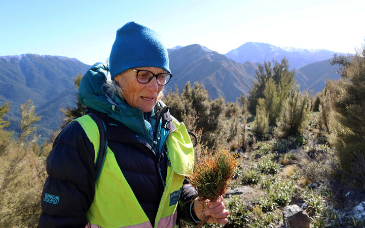 South Marlborough Landscape Restoration Trust co-ordinator Jaquetta Bradshaw with a wilding pine sapling.