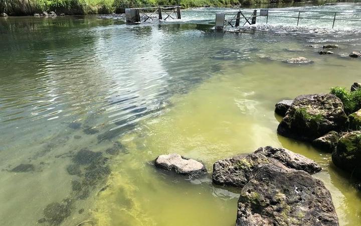 Potentially toxic algae bloom was found near Ohau Channel.