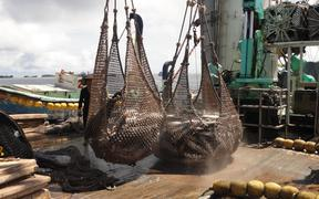 Tuna transshipment picked up in Majuro last month, but is still far off its average of the past five years