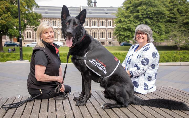 Levi, a German shepherd in training as a medical detection dog, is flanked by Pauline Blomfield of K9 Medical Detection NZ (left) and University of Otago Biostatistics Centre director Robin Turner.