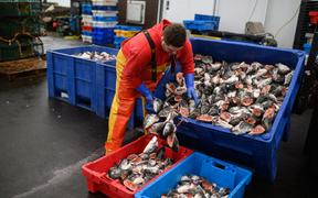 Fishermen sort and load trays of salmon heads as they prepare for their next voyage to sea, on the South Pier of Bridlington Harbour fishing port in Bridlington, north east England on December 11, 2020.